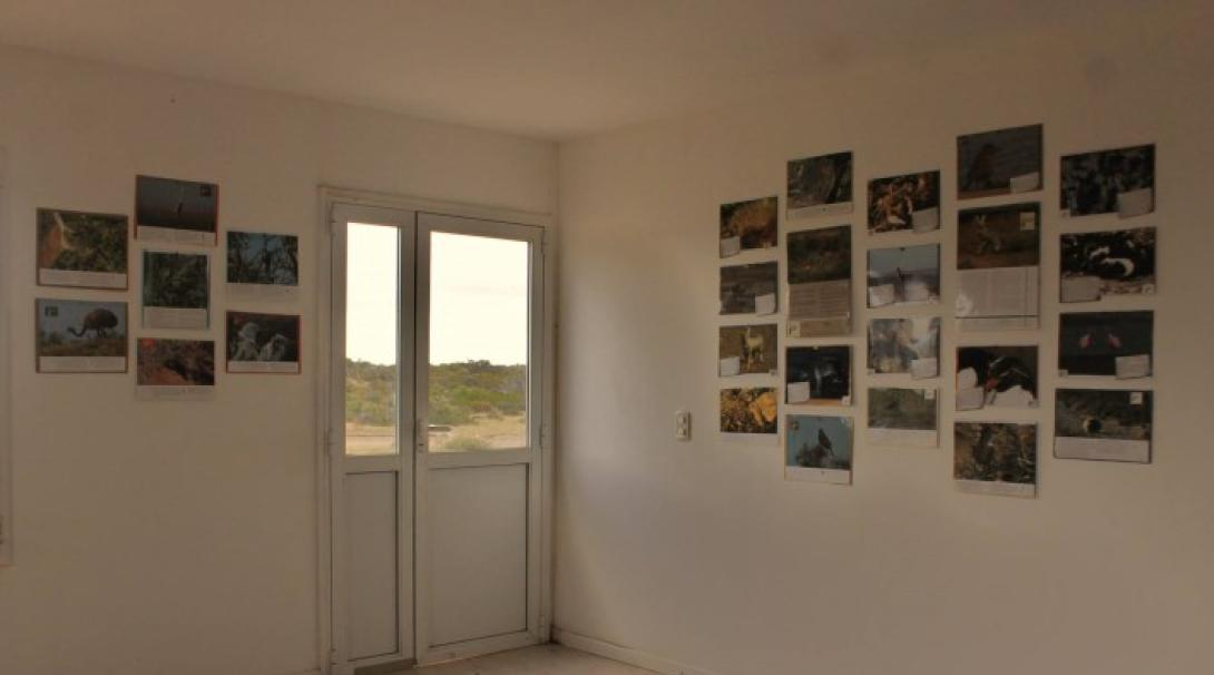 A room with pictures of wildlife